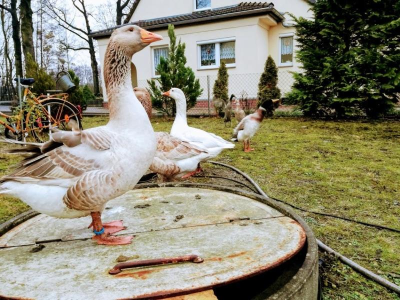 celler-gans-ferienwohnung-lausitzer-seenland-laubusch-helenes-ferienwohnung-urlaub-senftenberg