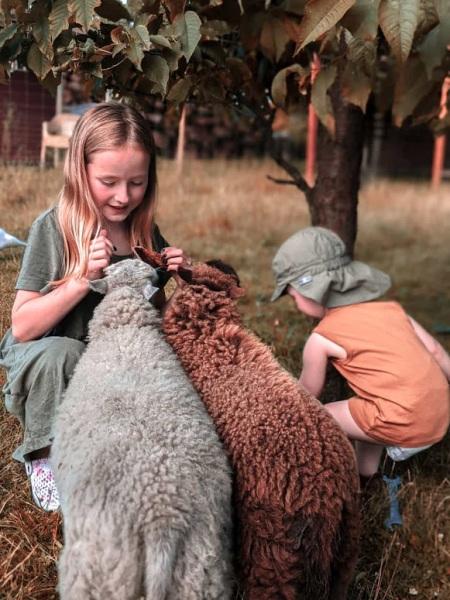 Ouessant Schafe - Urlaub - Helenes Ferienwohnung - Lausitzer Seenland - Laubusch